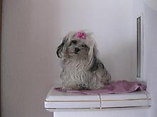 Prinzessin Puppi